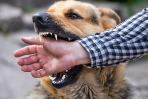 Atlantic County Dog Bite Injury Lawyers